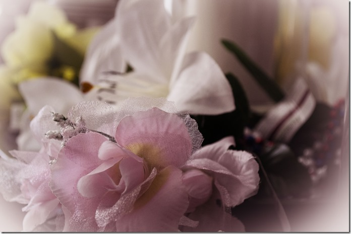 DSC_0414 pink